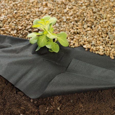 Planting through a fabric weed membrane and gravel dressing to retain moisture in the soil.